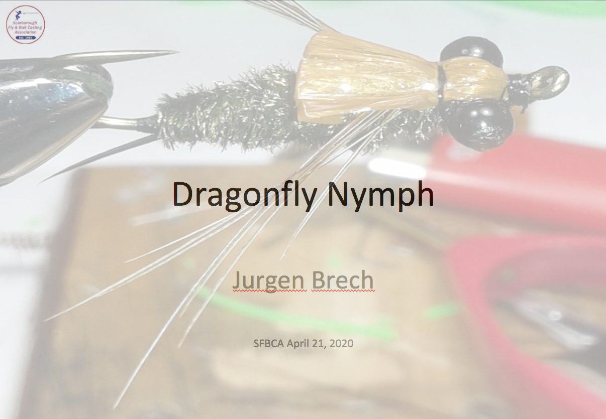 Jurgen dragonfly pic for FB posts